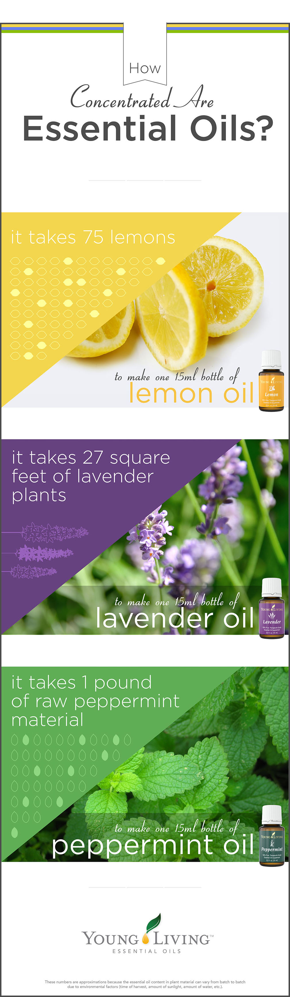 Lavender Essential Oil Promotes Breathing Freely Mama
